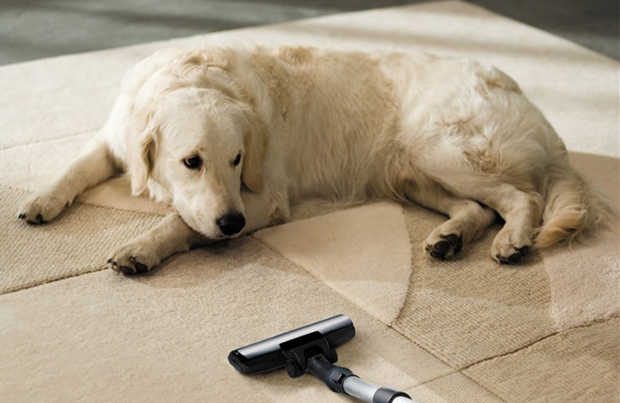 clean carpet image with dog